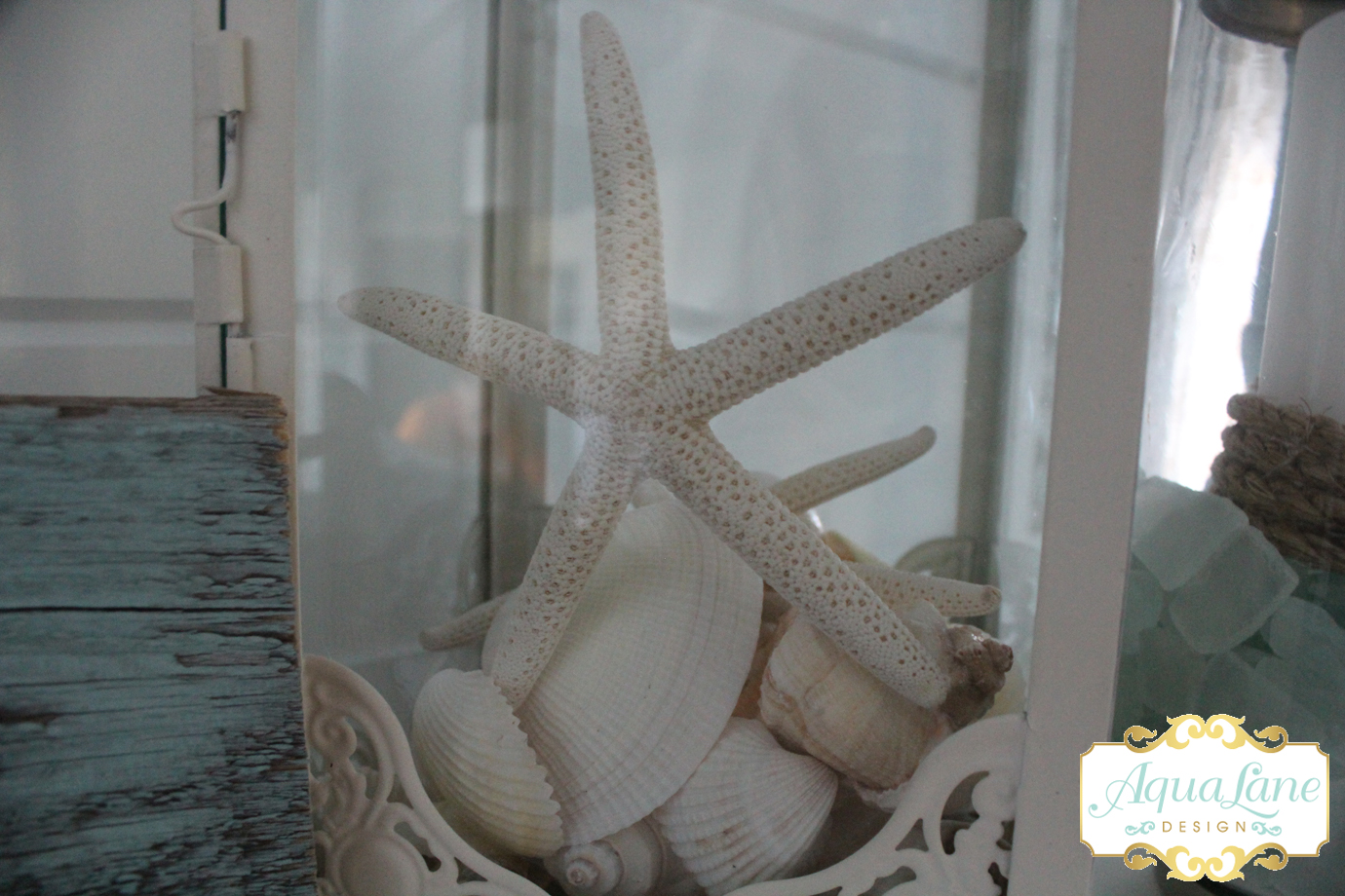 starfish seashells